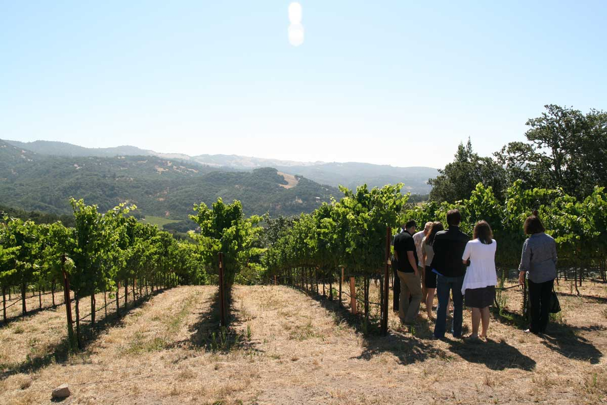 sonoma valley wine tours view