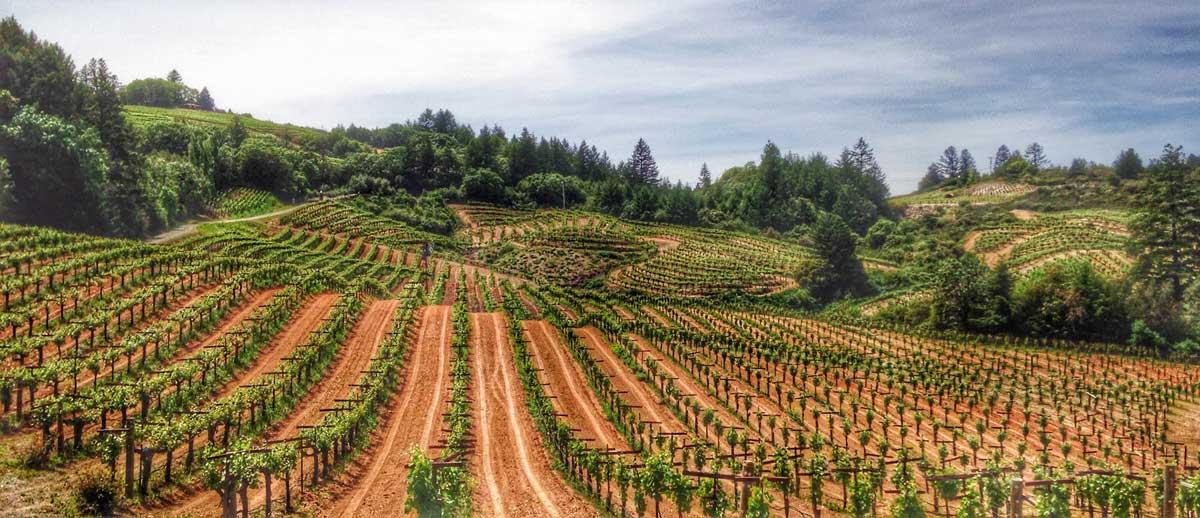 wine vineyard panoramic